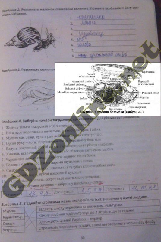 Решебник по биологии 8 класс рабочая тетрадь гусева калинчук