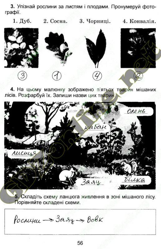 Гдз Зошит З Природознавства 1 Клас Гільберг Відповіді